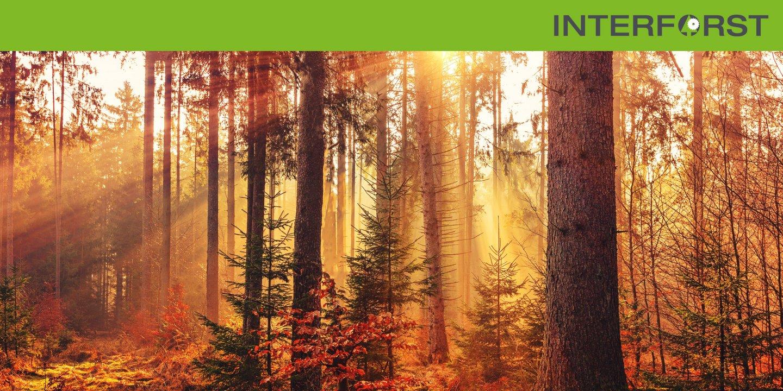 Interforst — kraftundadel